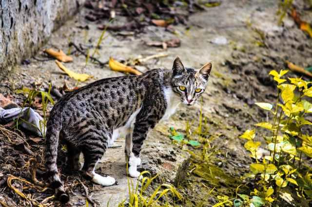 cat cat face pussycat cat eye